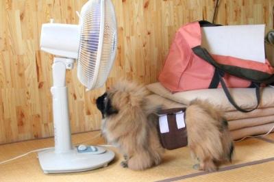 扇風機と空豆