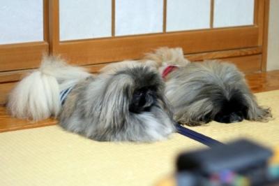 ビッケちゃん(左)、ブンちゃん(右)