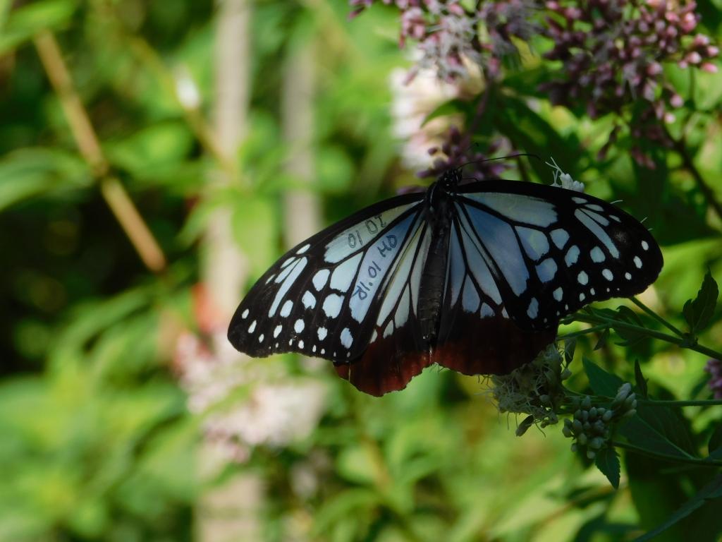 butterfly2019