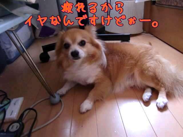 ファイル0011.jpg