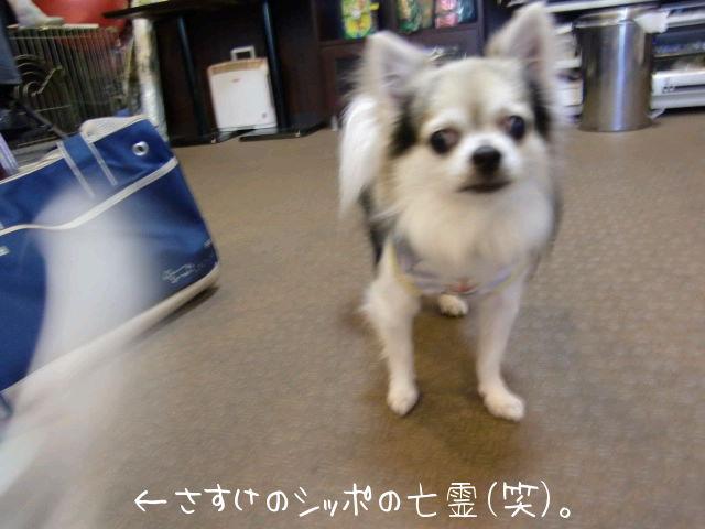 ファイル0010.jpg