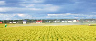 農業/畑で農作業する人々 - 無料写真素材