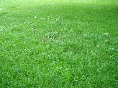 草原 - 無料写真素材
