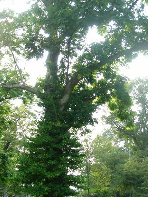 森林 - 無料写真素材