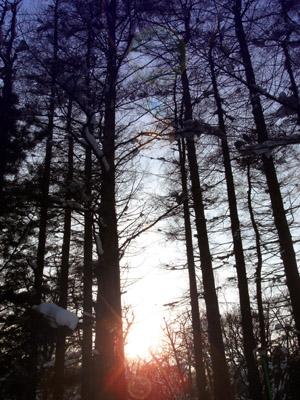 夕暮れの林 - 無料写真素材