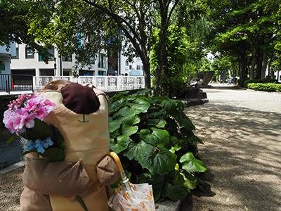 マイラッコと紫陽花