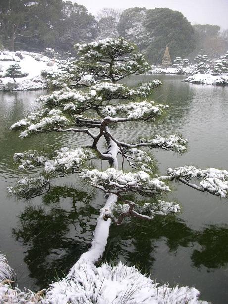 清澄庭園・雪
