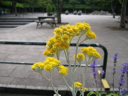 no flower no life