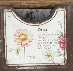 花(ダリア)とサボテン