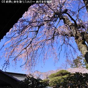 「桜」撮り♪ 対策