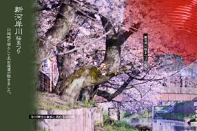 桜スポット