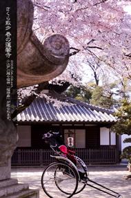 蓮馨寺のサクラ