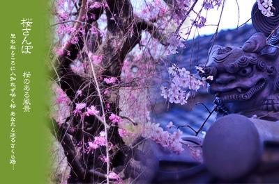 川越 桜さんぽ