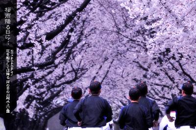 川越水上公園の桜2c