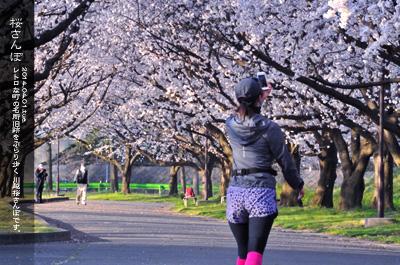 川越水上公園の桜2d