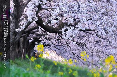 川越 桜雨 新河岸川