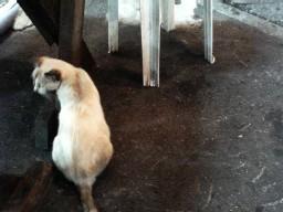 ソーキソバ屋の猫