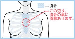 胸腺の場所