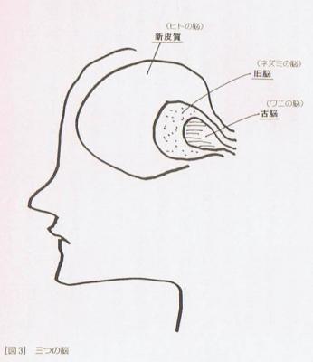 編集革命(図3)_ヒトの脳の新旧.jpg