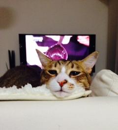 TV tatsu.png