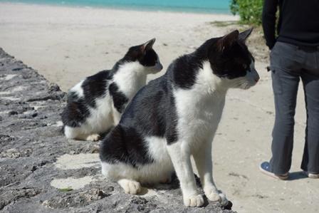 コンドイ浜の野良猫