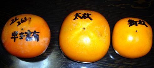 新種の富有柿
