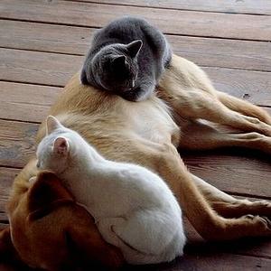 dog & cat 20