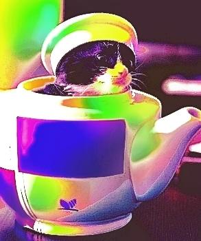 teacup cat 03