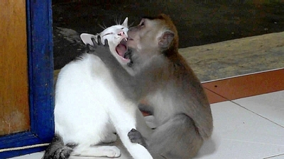 cat & monkey
