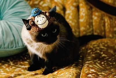 Siamese-Monkey-Hat
