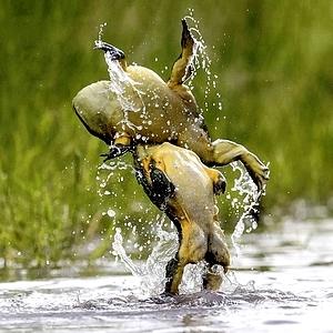 Frog Backdrop