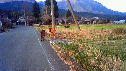3匹の子牛