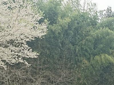 s-20160409蒜山高原_4569.jpg