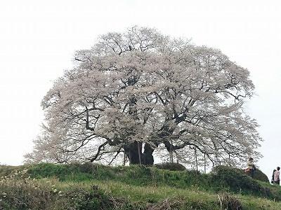 s-20160409蒜山高原_7785.jpg