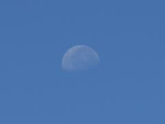 月がまだ・・・・