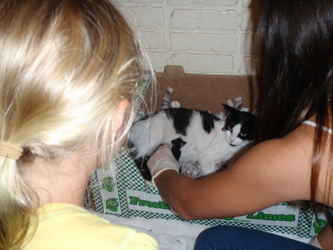 9月20日(月)子猫が産まれる・・・・母猫はチョコちゃんです。