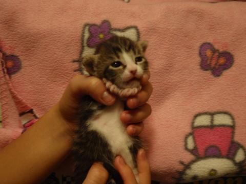 子猫のその後・・・二週間目。目が開きました〜!