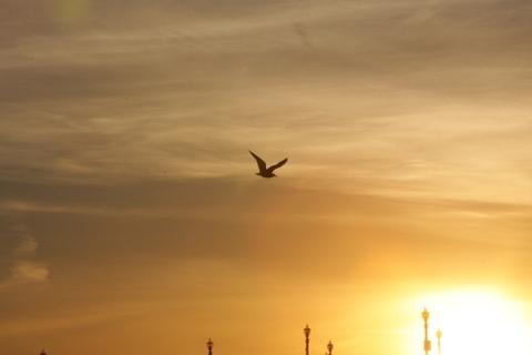 11月最後の夕日を撮りにサウスサイドに・・・・まずは、最後の波乗りかな。