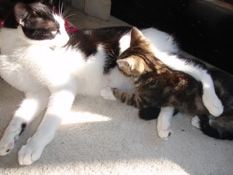 12月9日(木)最後の子猫、骨ちゃんが貰われて行く日・・・行く先は、SK8