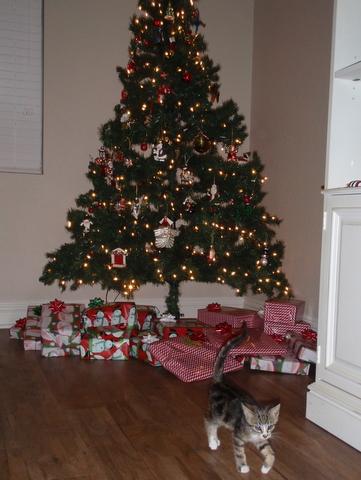 12月9日(木)最後の子猫、骨ちゃんが貰われて行く日・・・行く先は、SK8仲間の、ライアンの家!!