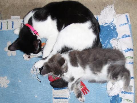 予約済みの、最後の1匹とママ猫・・・・
