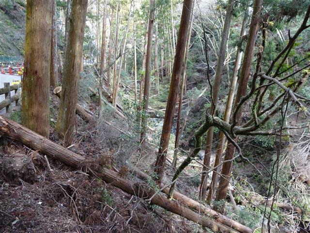 滝道・倒木