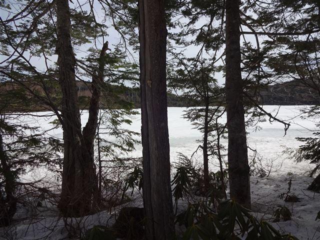 木立越の白駒池