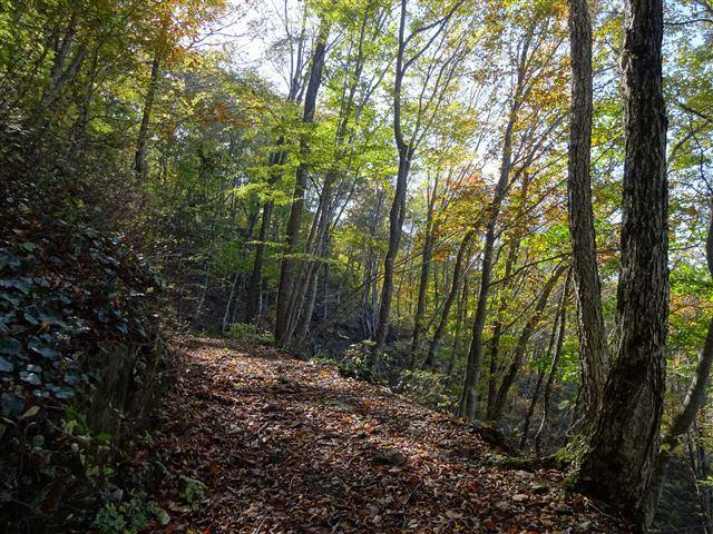 綺麗な森1