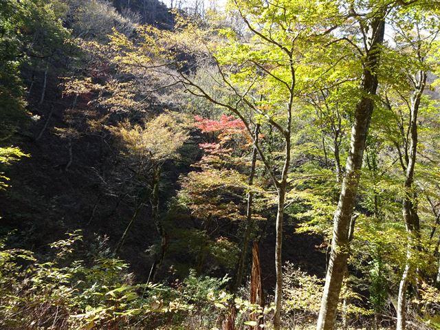 綺麗な森2