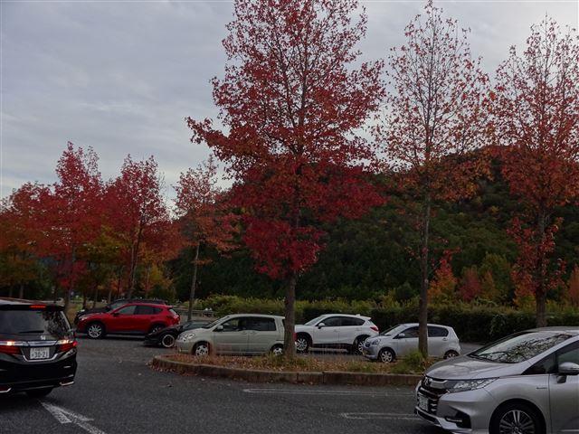 丹南PAの紅葉