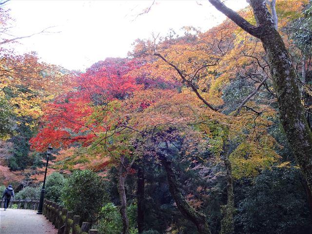 箕面川の紅葉1