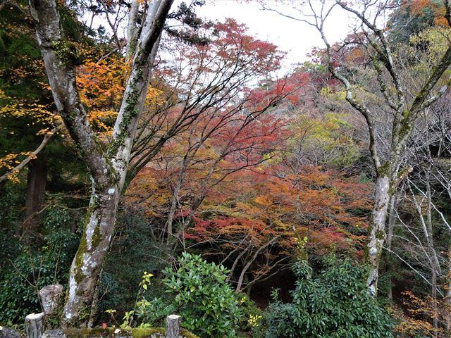 箕面川の紅葉2