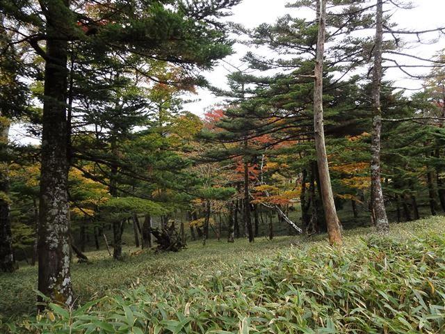 P手前の森2