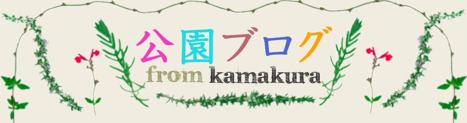 公園ブログ from KAMAKURA